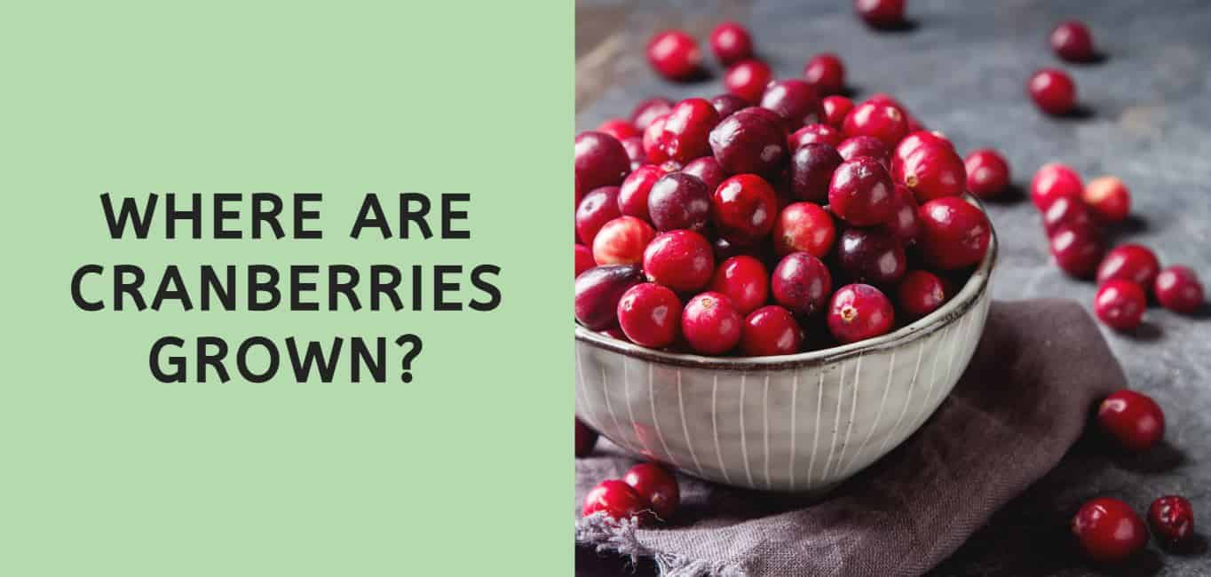 Where are Cranberries Grown?