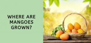 Where are Mangoes Grown?