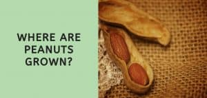 Where are Peanuts Grown?