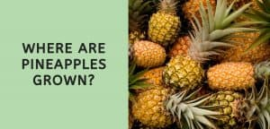 Where are Pineapples Grown?