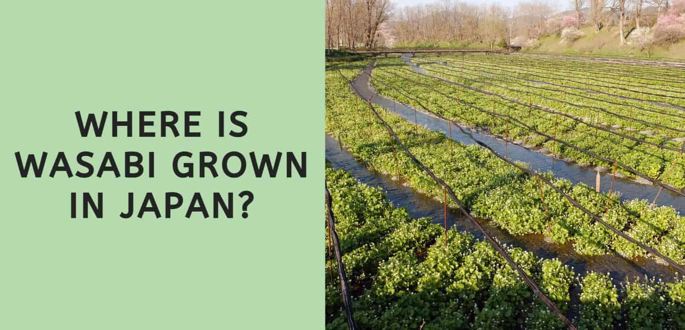 Where is Wasabi Grown in Japan?