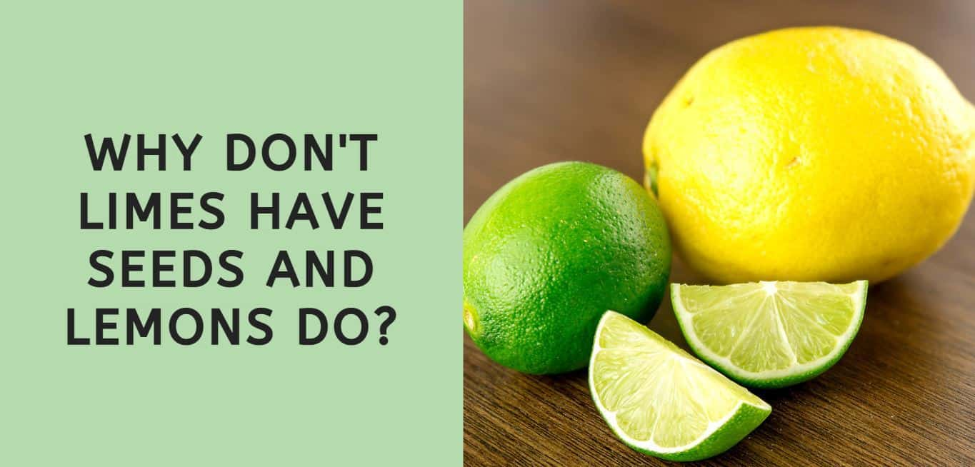Why Don't Limes Have Seeds and Lemons Do?
