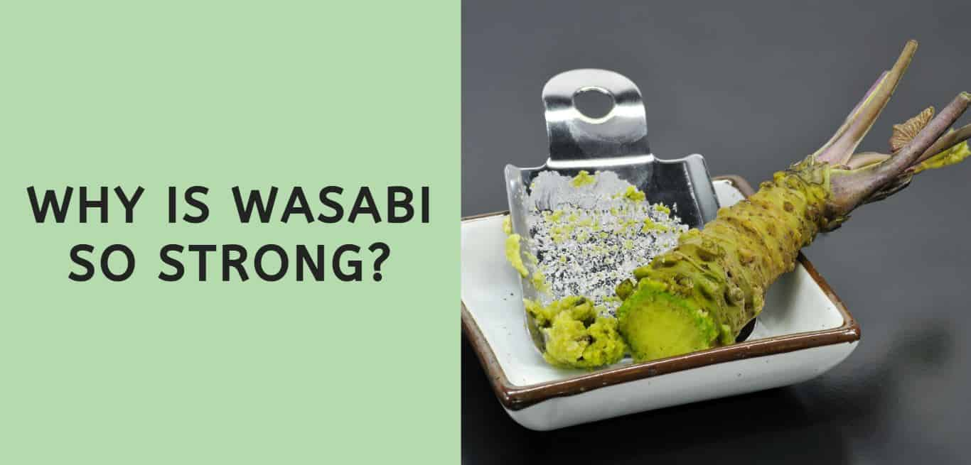 Why is Wasabi so Strong?