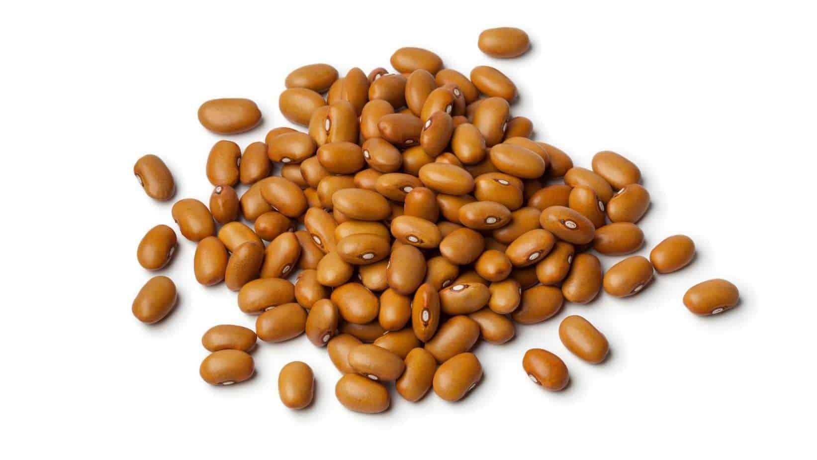Tepary Bean