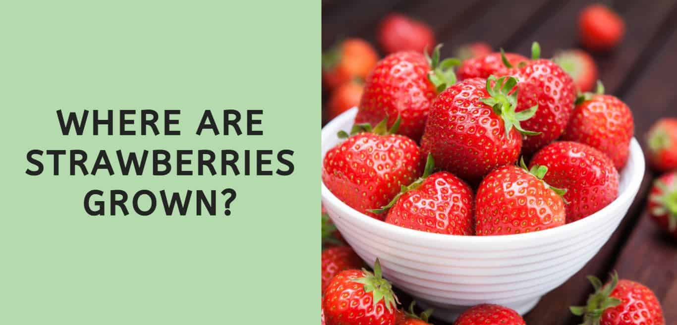 Where are Strawberries Grown