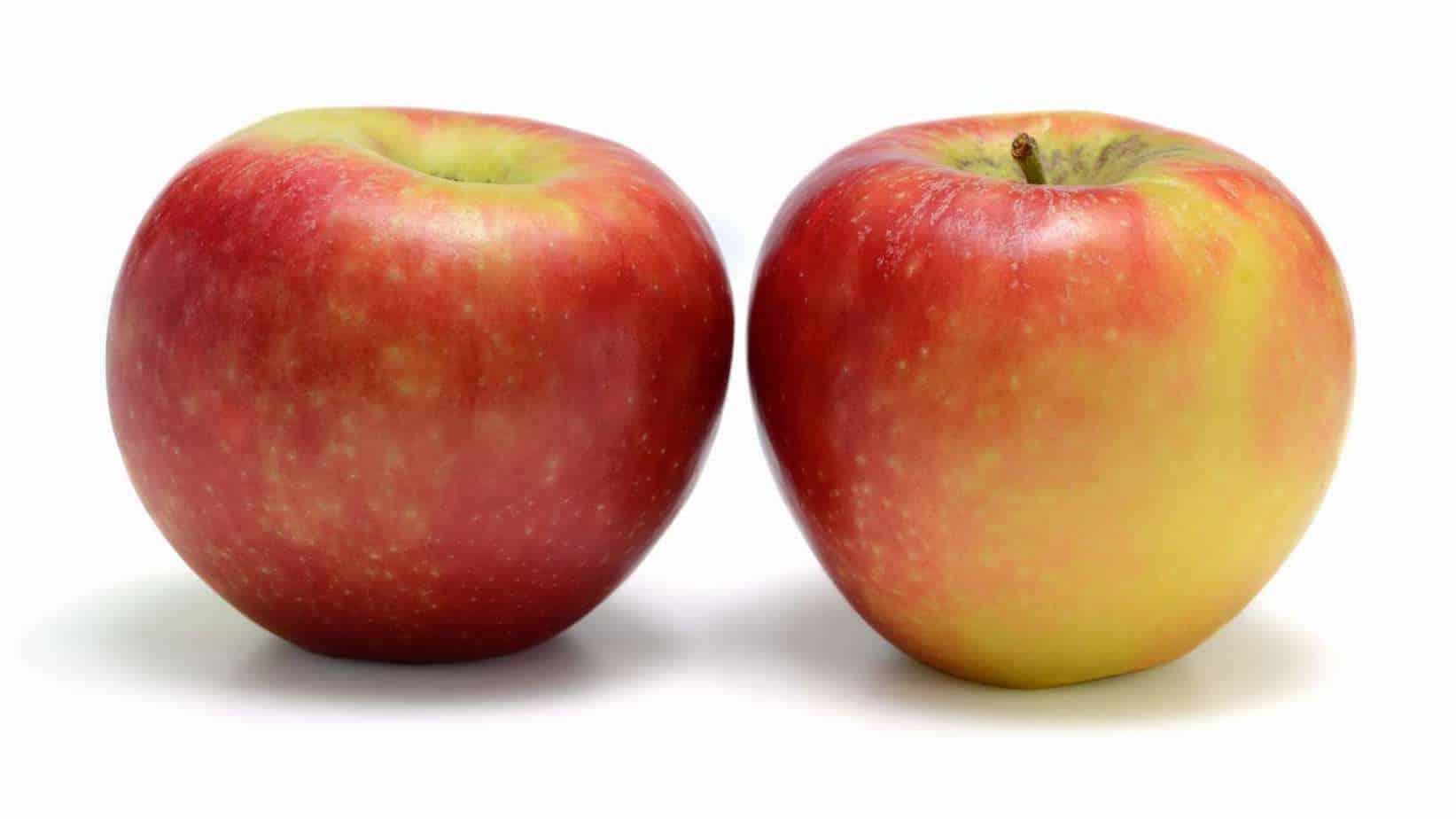 York Imperial Apple