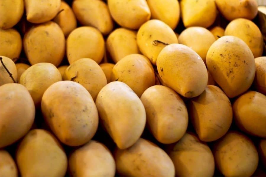 fascell mango