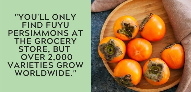 Persimmon Facts