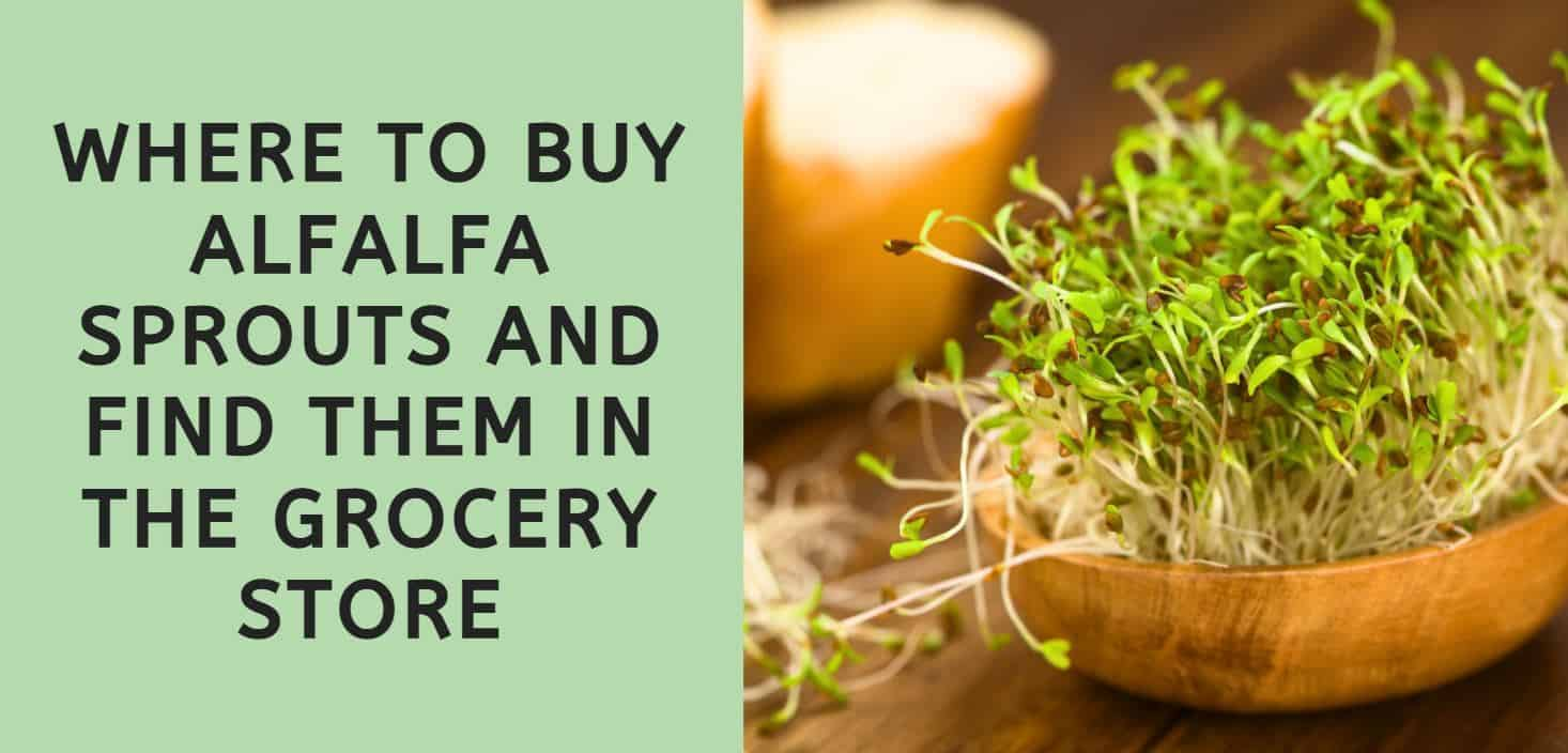 Where to Buy Alfalfa Sprouts