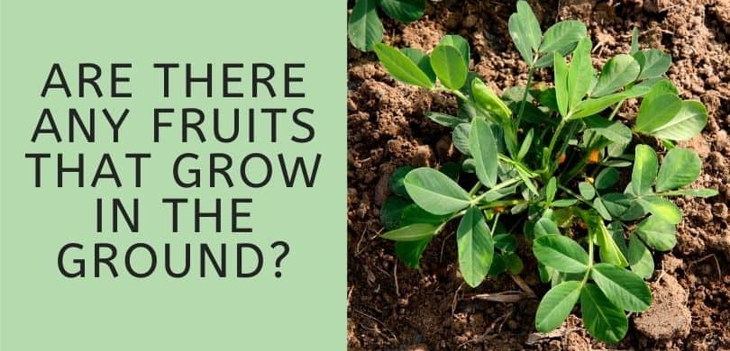 Fruits that Grow in the Ground