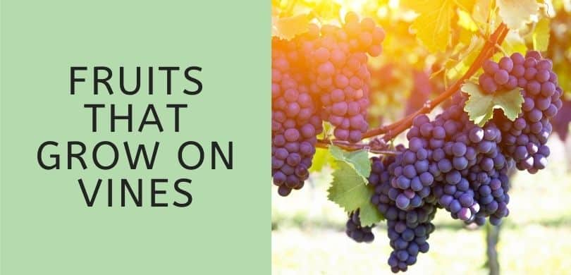 Fruits that Grow on Vines