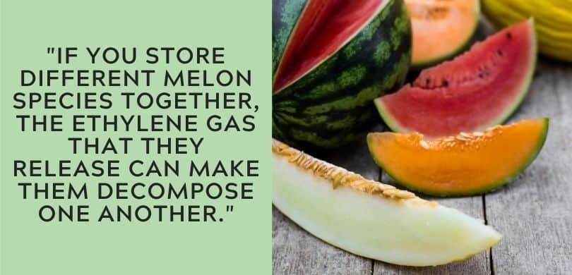 Melons and Ethylene