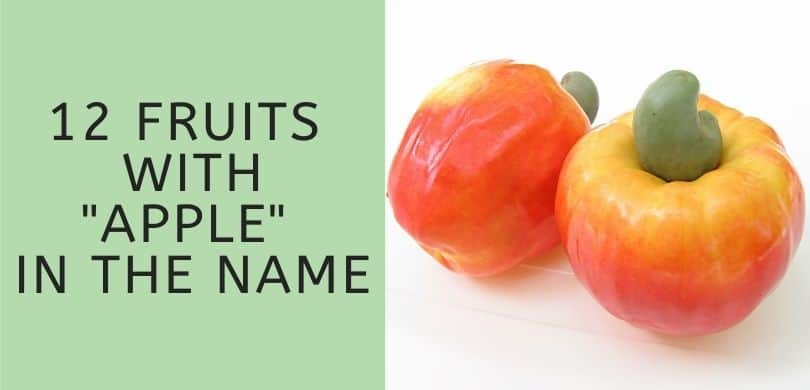 12 Fruits with Apple in the Name