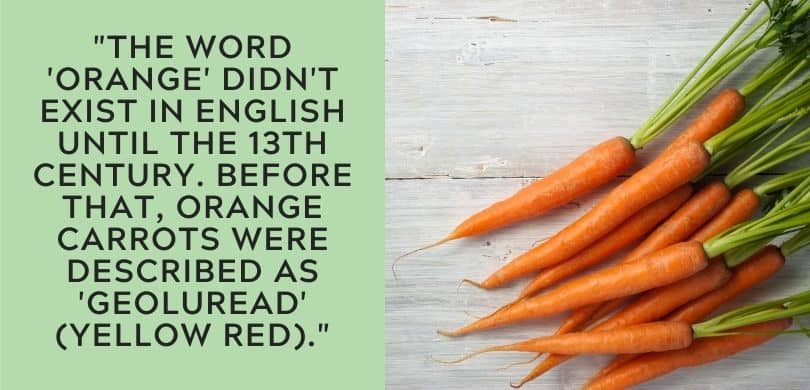 Why Carrots are Orange
