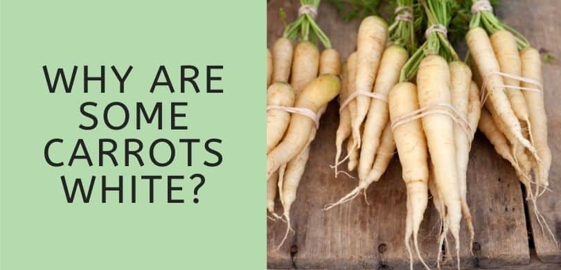 Why are Some Carrots White