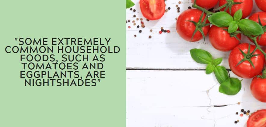 some extremely common household foods, such as tomatoes and eggplants, are nightshades.