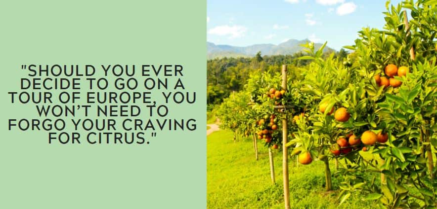 Should you ever decide to go on a tour of Europe, you won't need to forgo your craving for citrus.