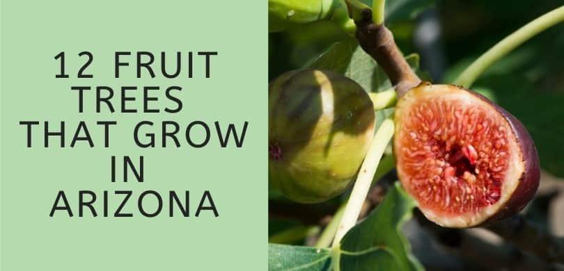 Fruit Trees that Grow in Arizona