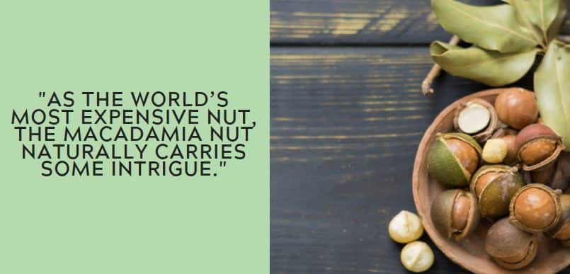As the world's most expensive nut, the macadamia nut naturally carries some intrigue.