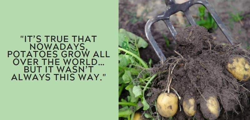 It's true that nowadays, potatoes grow all over the world…but it wasn't always this way.