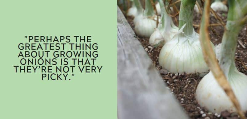 Perhaps the greatest thing about growing onions is that they're not very picky.