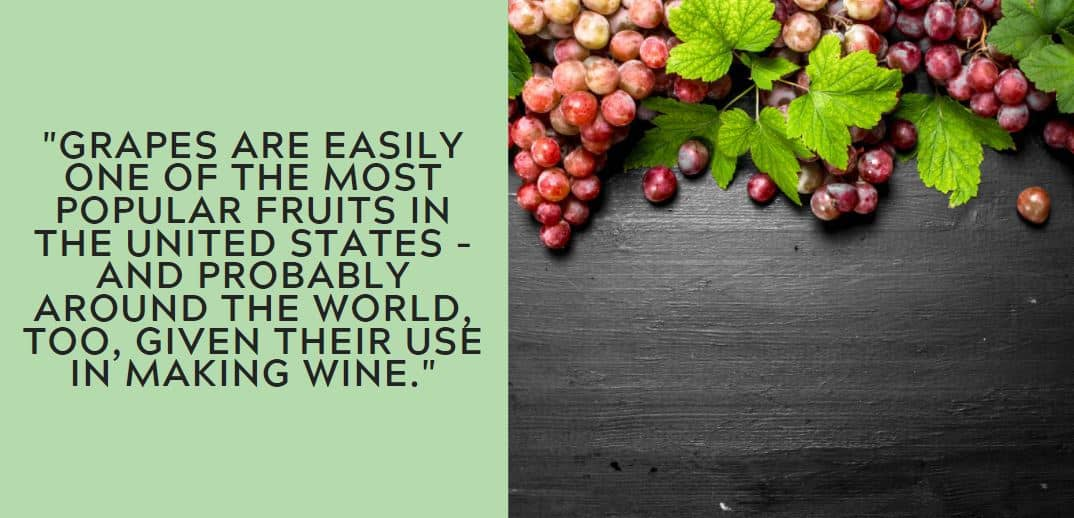 Grapes are easily one of the most popular fruits in the United States – and probably around the world, too, given their use in making wine.