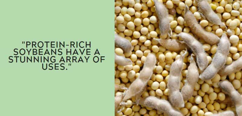 Protein-rich soybeans have a stunning array of uses.