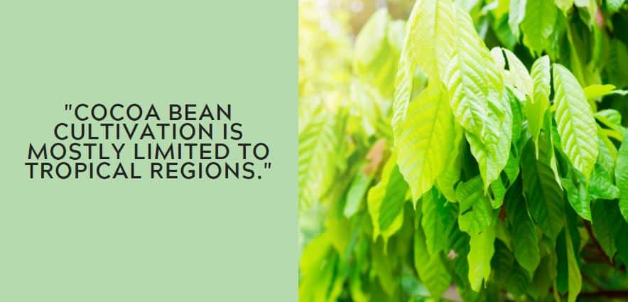 Cocoa bean cultivation is mostly limited to tropical regions.