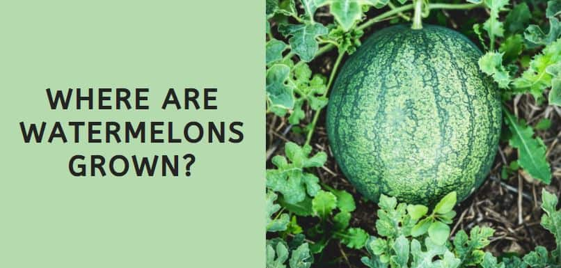 Where Are Watermelons Grown
