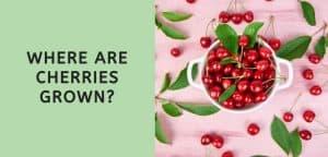 Where are Cherries Grown