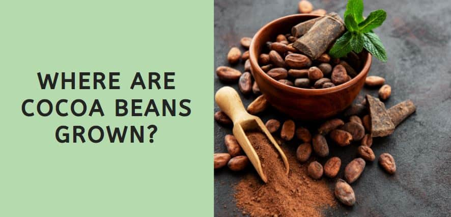 Where are Cocoa Beans Grown