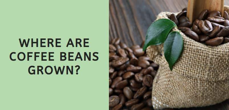Where are Coffee Beans Grown