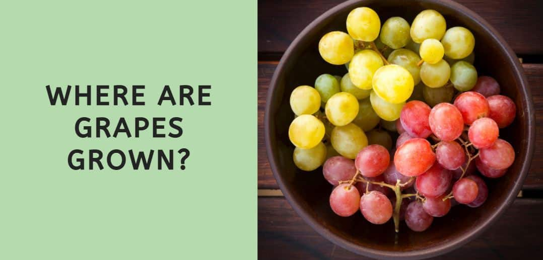 Where are Grapes Grown
