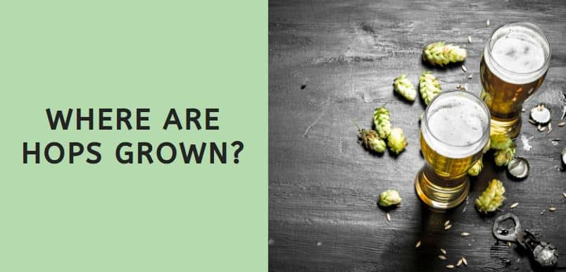 Where are Hops Grown