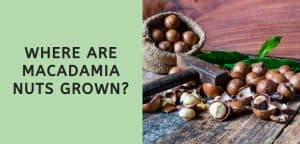 Where are Macadamia Nuts Grown