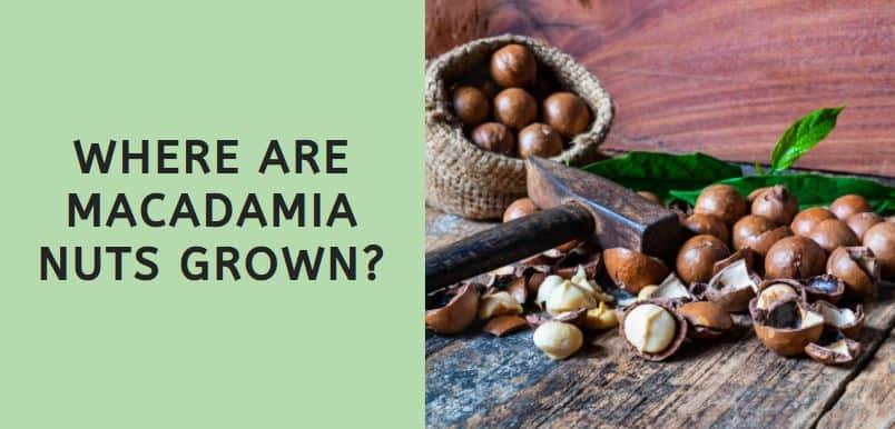 Where are Macadamia Nuts Grown