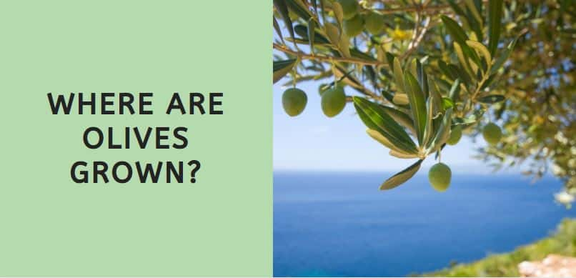 Where are Olives Grown