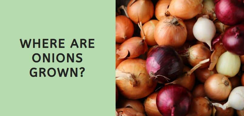 Where are Onions Grown