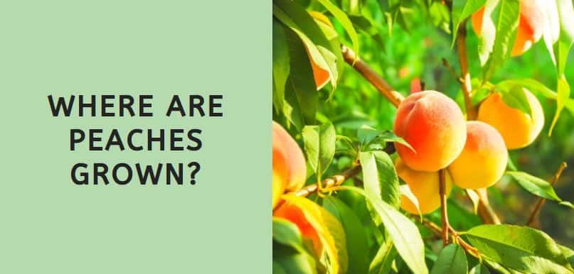 Where are Peaches Grown