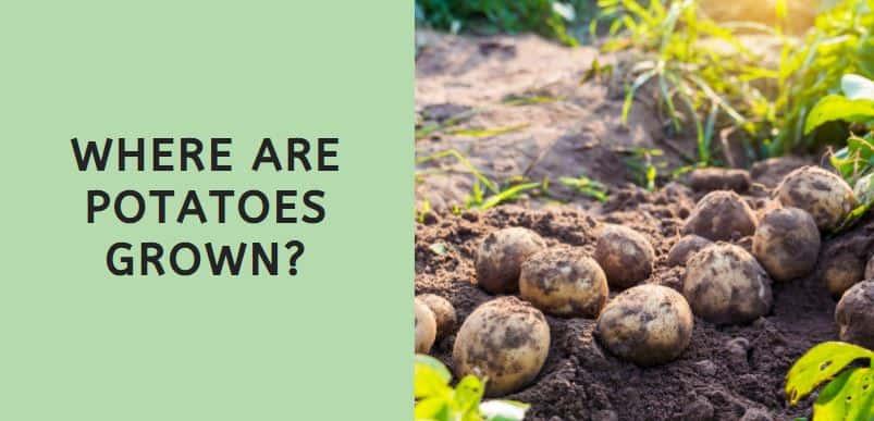 Where are Potatoes Grown