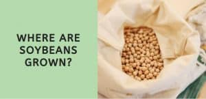 Where are Soybeans Grown