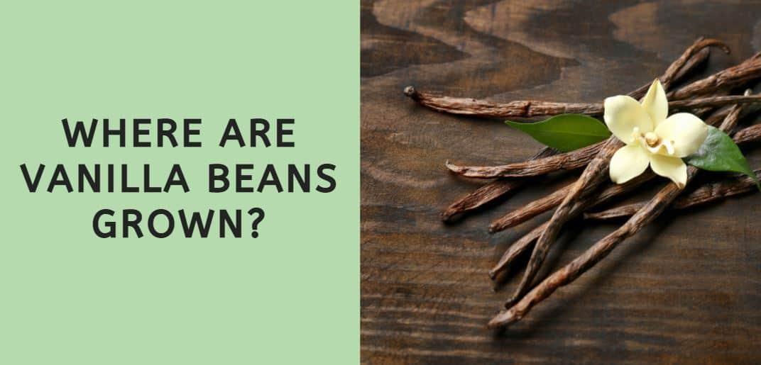 Where are Vanilla Beans Grown