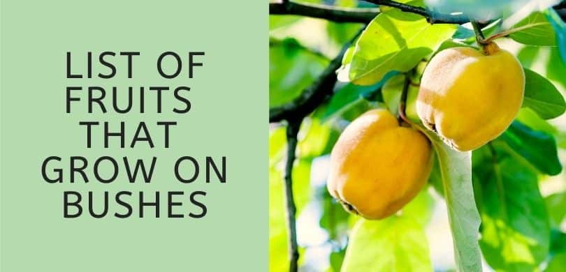 List of Fruits That Grow on Bushes