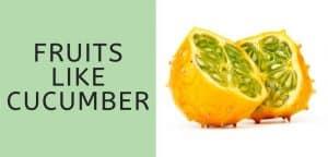 Fruits Like Cucumber