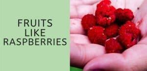 Fruits Like Raspberries