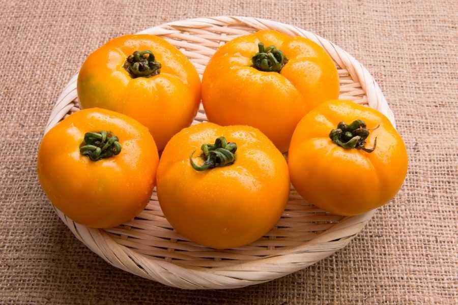 Orange peach tomatoes