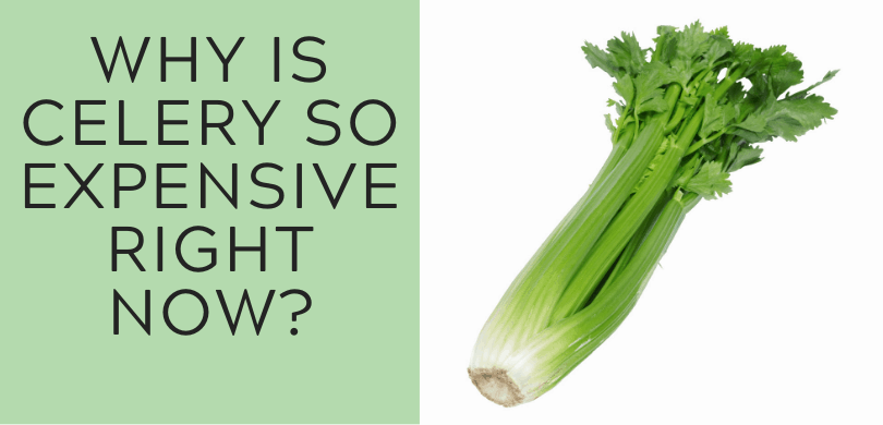 WHY IS CELERY SO EXPENSIVE RIGHT NOW?
