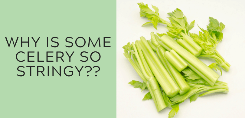 Why Is Some Celery So Stringy?