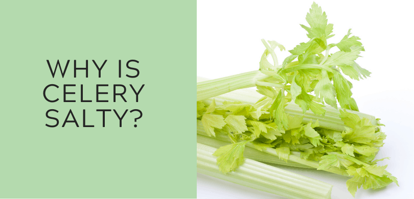 Why is Celery Salty?
