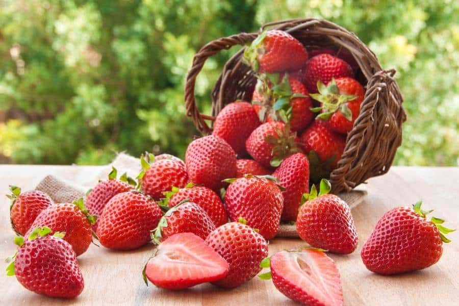 Strawberries spilled from basket